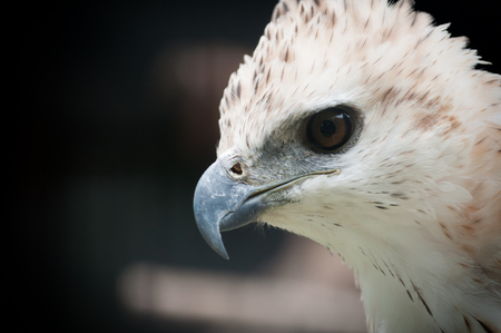Hawk, eagle and falcon are a bird hunter with sharp eyes.