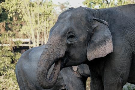 Elephants are using turkeys to drink water.
