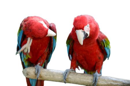 macaw is a beautiful bird 写真素材