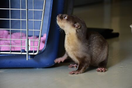 Baby otter in the nursery section Stock Photo