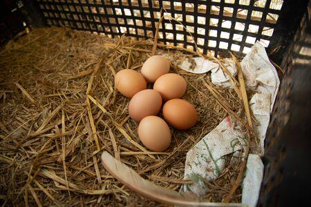 Chicken eggs in the nest Foto de archivo