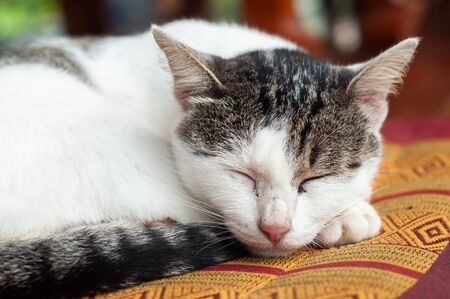 Cats are animals that spend a lot of time during the day for sleeping.