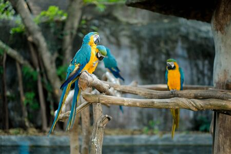 In the wild, macaws help promote forest growth by dropping a lot seed they are eating on the ground and spreading seeds throughout the forest.