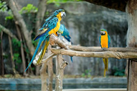 In the wild, macaws help promote forest growth by dropping a lot seed they are eating on the ground and spreading seeds throughout the forest. 스톡 콘텐츠
