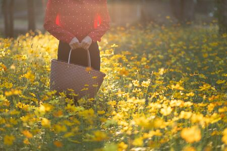 The girl carried the basket through the yellow flower fields during the sunset and shone from behind. Reduce global warming by refraining from using plastic bags. Stock Photo