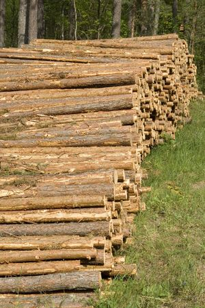 Lumber in a forest. Stock Photo