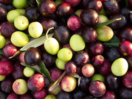 Many colorful olives background