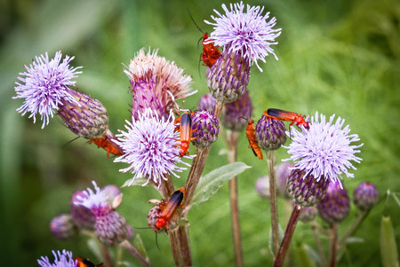 purples: Insect on purples flowers field