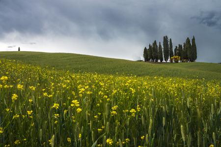 orcia: Val Dorcia landscape in spring. Tuscany, Italy