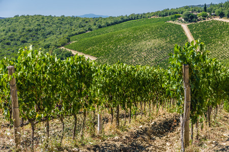 View from Vertine in Chianti. A vineyard in Tuscany, Italy