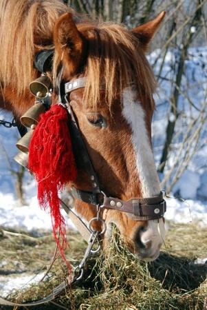 reigns: Horse Head