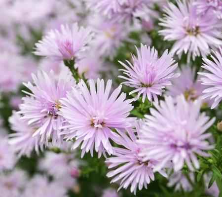 Beautiful flowers background Stock Photo - 10464847