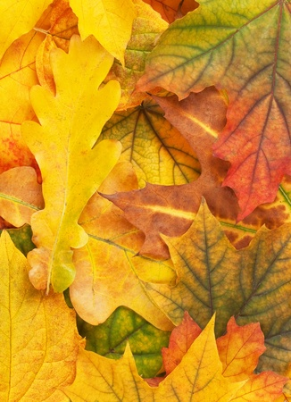 Beautiful yellow autumn leaves background photo