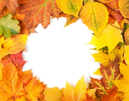 Yellow autumn leaves isolated on white photo