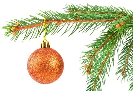 Christmas ball on a fir tree branch isolated on white photo