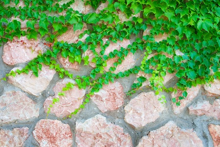 Stone wall and green plants photo