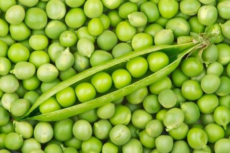 Fresh green pea pod on pile of pea grains photo