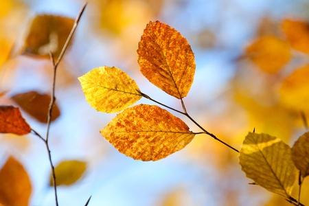 Closeup of autumn leaves against blue sky photo