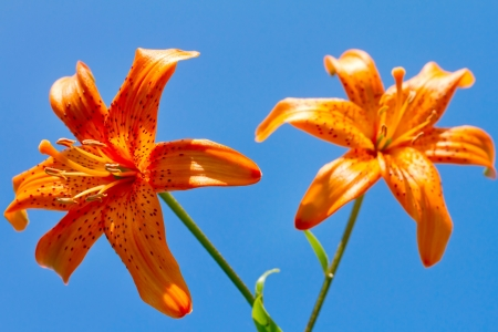 Closeup of a beautiful orange flowers against blue sky photo
