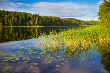 Forest lake, summer landscape photo