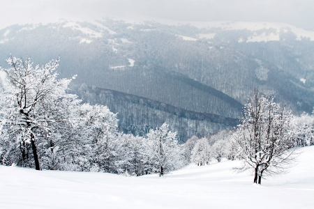 Snow covered branches in winter forest photo