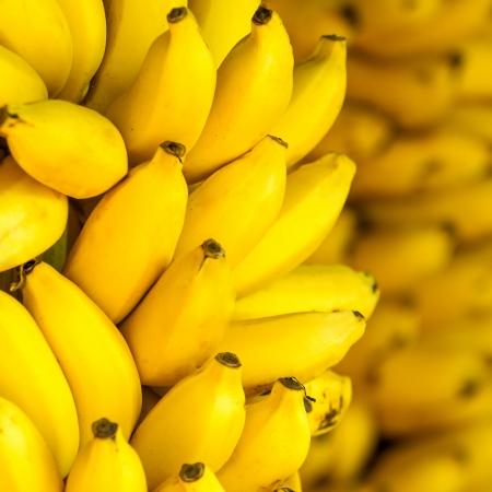 banana tree: Bunch of ripe bananas background