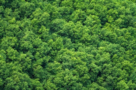 Green trees background