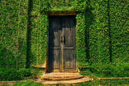 door leaf: Old wooden door in the wall covered with green ivy Stock Photo