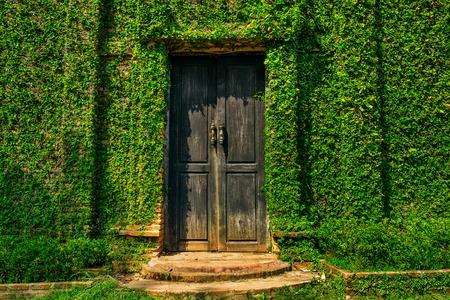 Oude houten deur in de muur bedekt met groene klimop Stockfoto