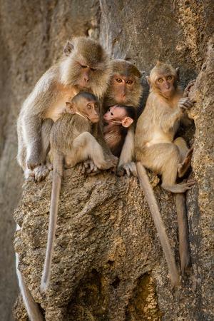 Monkey family sitting on a rock photo