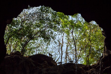 Monkeys silhouettes at the cave entrance photo