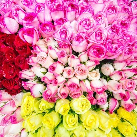 Beautiful roses with rain drops closeup photo