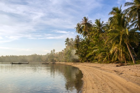 phangan: A tropical beach with palm trees at Koh Phangan island, Thailand
