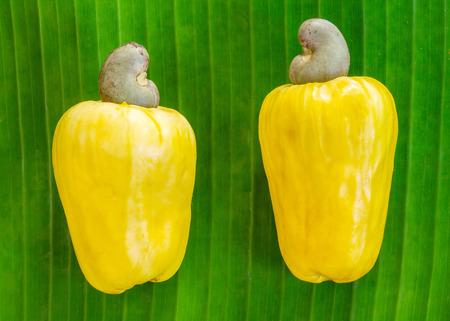 cashew tree: Cashew nut fruits on the green leaf background Stock Photo