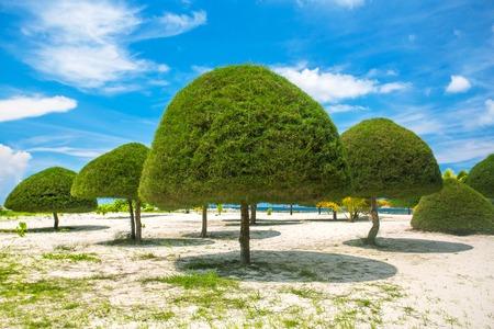 phangan: Decorative shaped trees on the beach in Koh Phangan island, Thailand Stock Photo