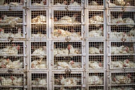 インドの鶏肉店 写真素材