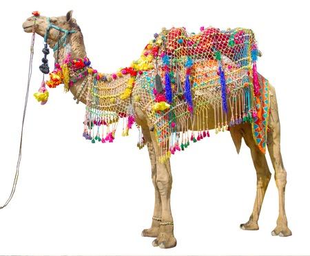 Camel mit traditioneller Dekoration isoliert auf weiß Standard-Bild - 32803697