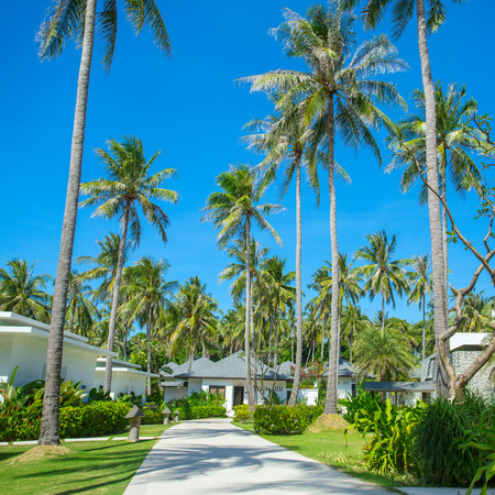 architecture bungalow: Beautiful tropical resort bungalows under the palm trees Stock Photo