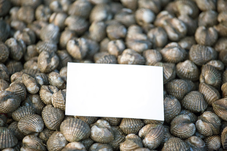 cockles: Fresh cockles seafood background