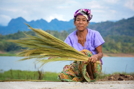 separates: Sangkhlaburi, Kanchanaburi, Thailand - January  12, 2015:  An unidentified Mon ethnic woman separates seeds from rice plant on in harvesting season in Thailand Editorial