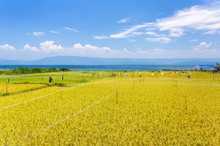 sumatra: Rice field near lake Toba in North Sumatra, Indonesia Stock Photo