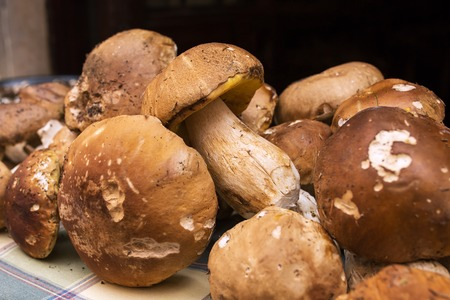 flavorful: Close up bunch of Porcini mushrooms at the market in Italy