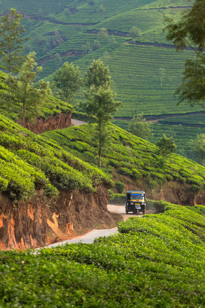 rikscha: Indian Auto Rickshaw travelling through tea plantation near Munnar, India