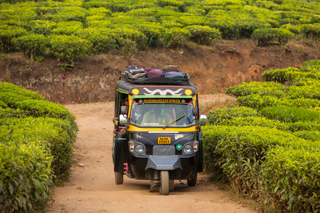 auto rickshaw: MUNNAR, INDIA - JANUARY 8: Indian Auto Rickshaw travelling through a tea plantation on January 8, 2016 in Munnar, Kerala, India. Editorial