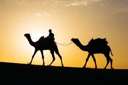 thar: Rajasthan travel background - camel silhouette in dunes of Thar desert on sunset. Jaisalmer, Rajasthan, India