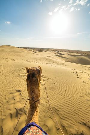 thar: Camel rider view in Thar desert, Rajasthan, India
