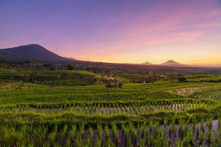 Beautiful sunrise over the Jatiluwih Rice Terraces in Bali, Indonesia