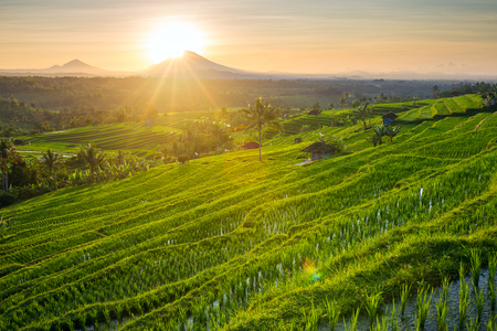 Prachtige zonsopkomst boven de Jatiluwih Rice Terraces in Bali, Indonesië Stockfoto