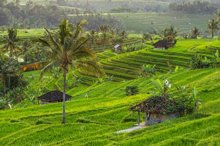 Beautiful Jatiluwih Rice Terraces in Bali, Indonesia
