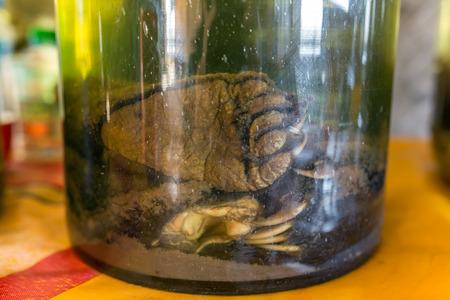 아시아계 블랙 베어 (Ursus Thibetanus) 발톱이 라오스에서 발효 중임 스톡 콘텐츠